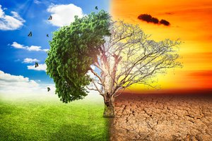 global-warming-climate-change-tree_1big_stock2.jpg